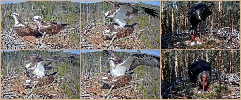 Stork 20-4