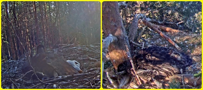 Stork-Örn 30-5