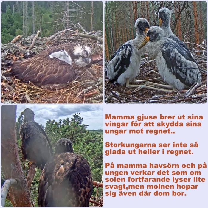 Fåglar 24-6