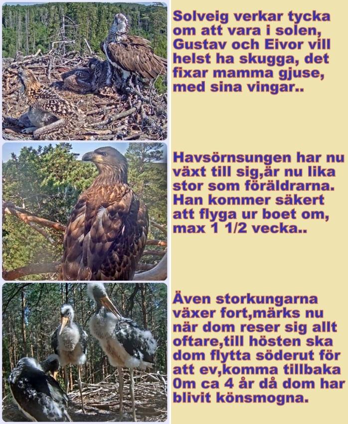 Fåglar 28-6