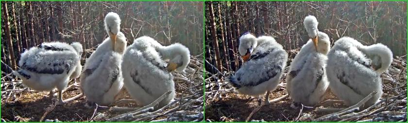 Stork 14-6