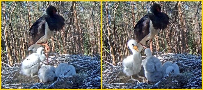 Stork 7-6
