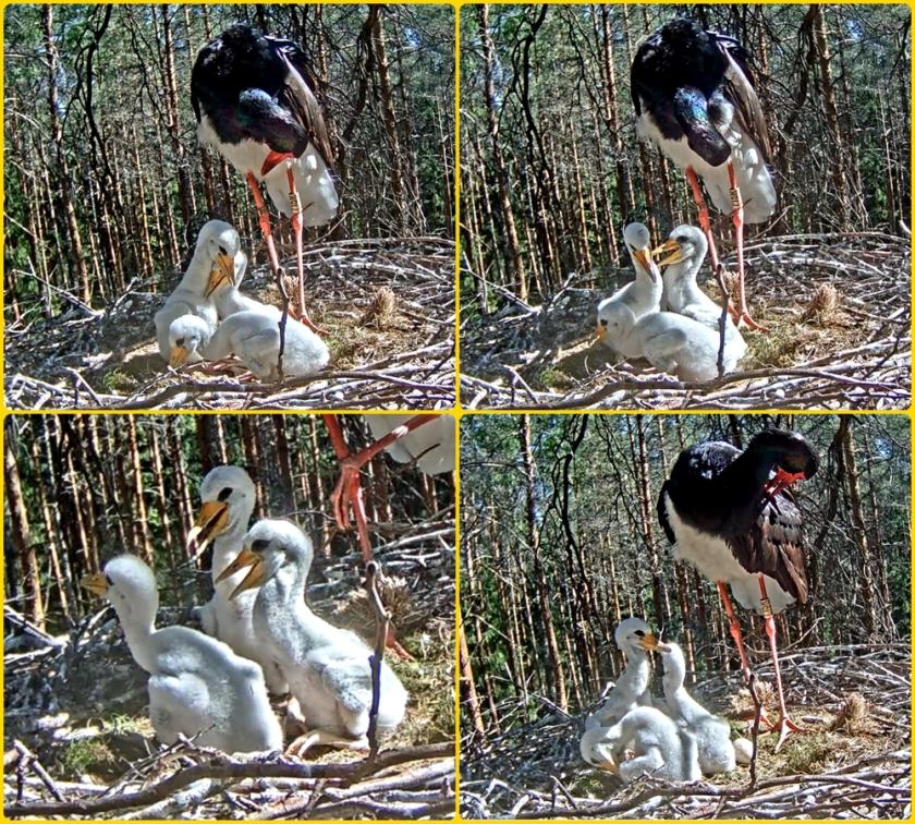 Stork1-6