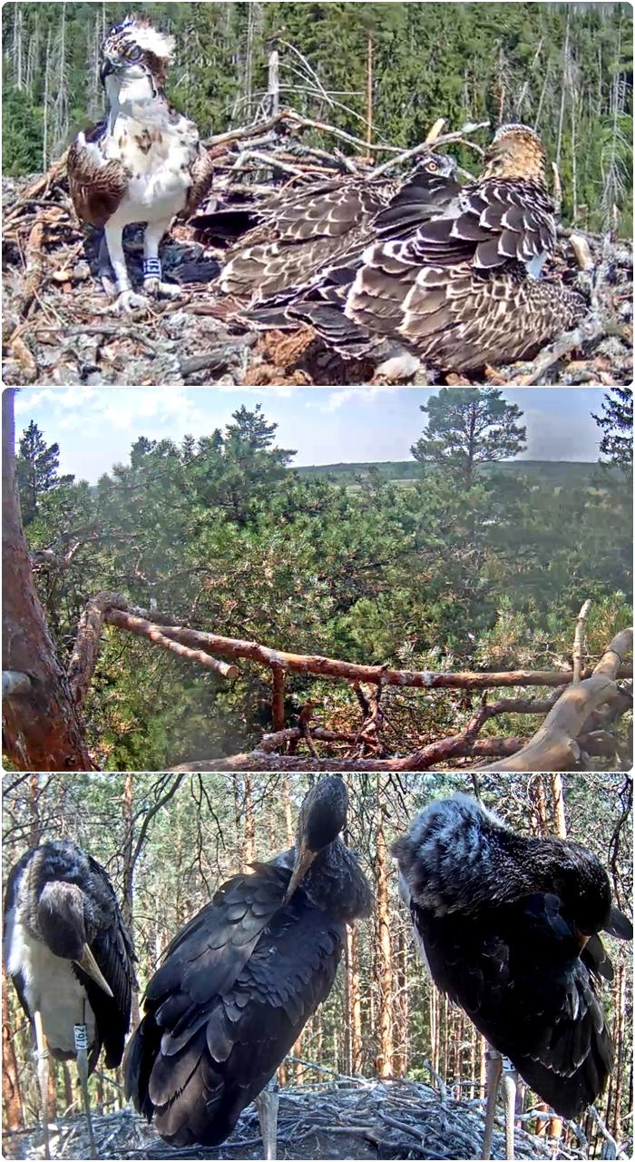 Fåglar 17-7