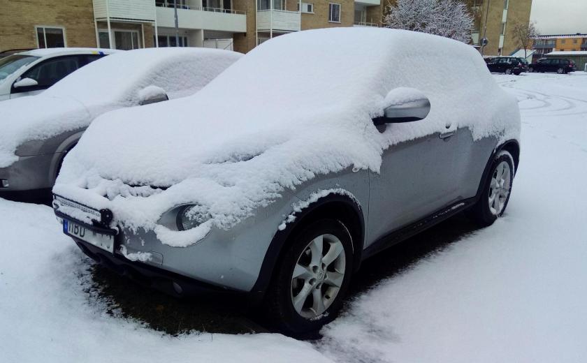 Grodan i snö