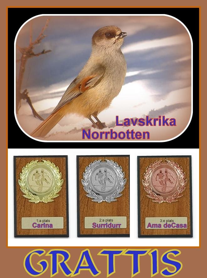 Norrbotten Lavskrika-vert